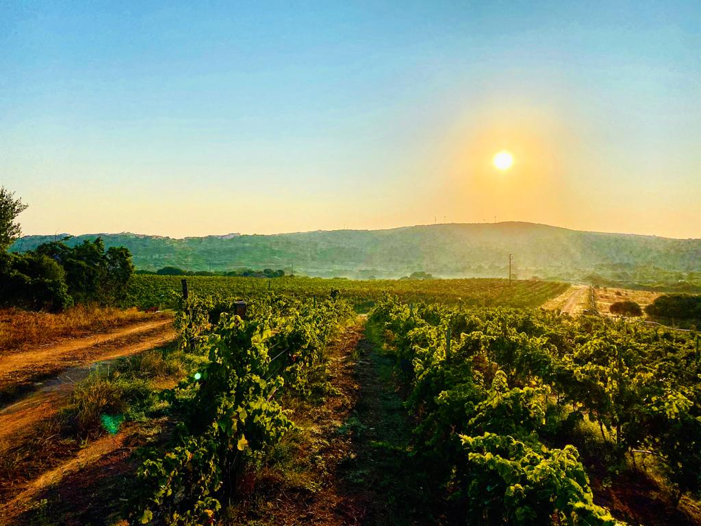 Vineyards - Tenute Filigheddu
